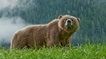 Gary Sadlemyer and KFAB's Morning News - He Survived a Grizzly Attack!