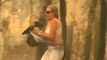 Weird News - Video Captures Australian Woman Braving Brushfire To Save Injured Koala