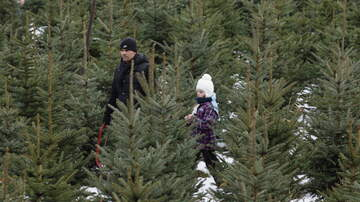 Wendy Wild - The Best Day To Buy Your Christmas Tree Is…