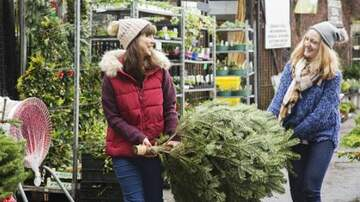 Julie's - Here's The Best Day to Buy Your Christmas Tree