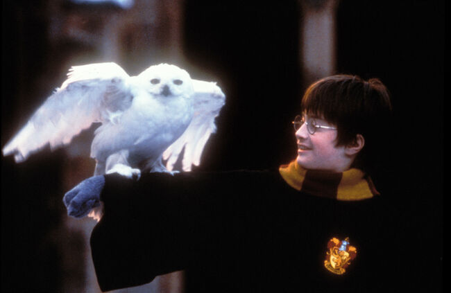 Where To Watch The Epic 3-Day 'Harry Potter' Marathon Thanksgiving Weekend