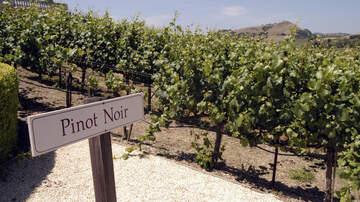 Beth & Friends - Beth's Wine Pick!  Ken Wright Cellars Pinot Noir