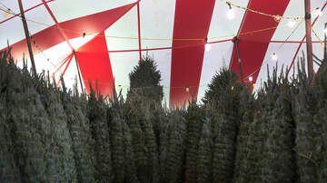 Sisanie - A Christmas Tree Shortage May Impact Your Holiday