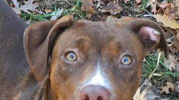 Renee's Adoptable Pet Picks - Meet Dog #170, she's only 8 months old!