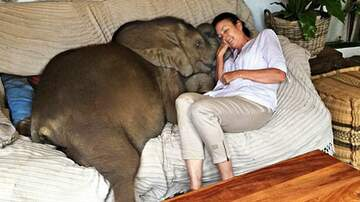 Leigh Ann and Jeremy - Woman Saves A Baby Elephant From Death And Now She Follows Her Everywhere!