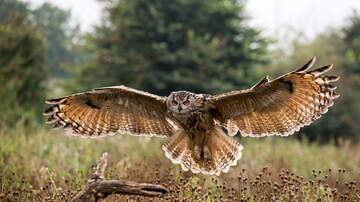 Spencer & Kristen - Road Crew Saves An Owls Life