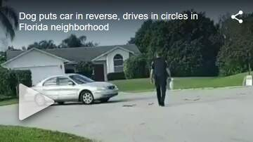 Carter - VIRAL: Dog Puts Car In Reverse, Drives In Circles In Florida Neighborhood