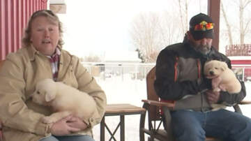 National News -  Snowmobilers Rescue Puppies Stranded On Utah Mountaintop