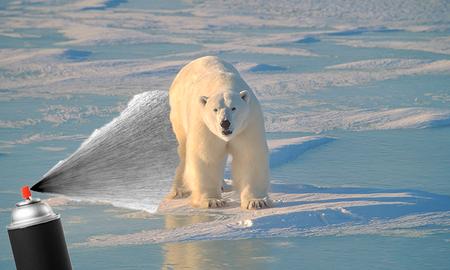 Weird News - Polar Bear Spray-Painted With Odd Marks Leaves Wildlife Experts Baffled