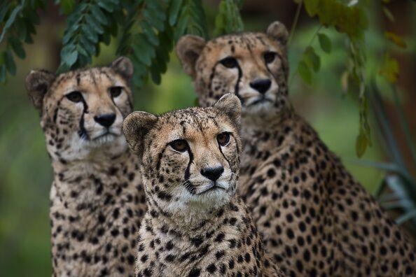 TOPSHOT-FRANCE-ANIMAL-NATURE-TOURISM