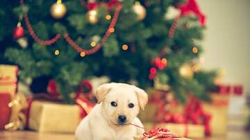Jaime in the Morning! - Social Dilemma-Are Your Pets On Your Christmas List? Do You Buy Them Gifts?