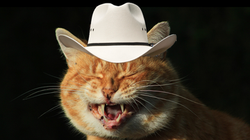 Weird, Odd and Bizarre News - Cat With Southern Accent Goes Viral
