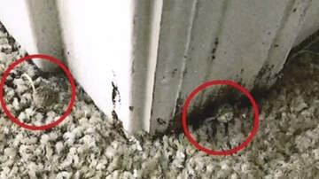 National News - Mold Caused Mushrooms To Grow Out Of Carpet At Florida Military Housing