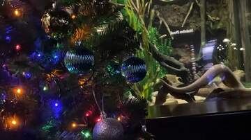 Coast to Coast AM with George Noory - Watch: Electric Eel Powers Christmas Lights at Aquarium in Tennessee