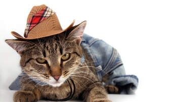 Hoody - You NEED to Watch This Cat With a Southern Accent!