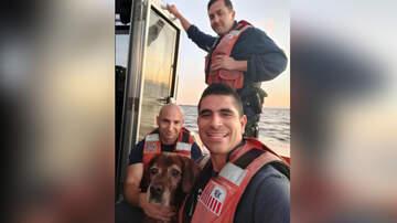 National News - Coast Guard Rescues Dog Swimming Off Florida Beach
