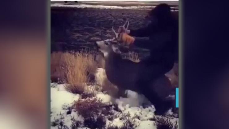 oregon teen arrested after riding mule deer