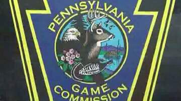 Reading and Harrisburg Breaking News - PA Game Commission Needs Your Help - 3 Elk Found Mysteriously Shot
