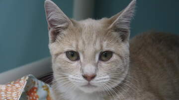 None - LCHS Pet of the Week: Sandra Dee