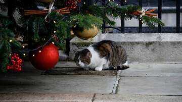 Courtney's Corner - Courtney's Corner: Keeping Your Cat Out of Your Christmas Tree!