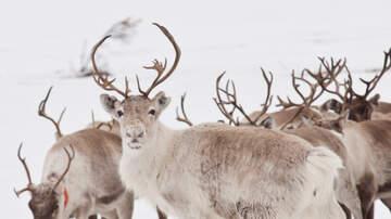 Jennie James - Santa's Vet Has Okayed The Reindeer For Flight!
