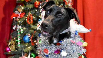 Pat McMahon - Meet Rosie - Our dog of the day for 12 Dogs of Christmas!