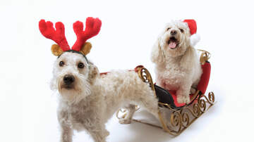 Chuck Britton - Dogs in Christmas Sweaters Dash Through Snow in Little Sleighs