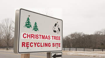 Vegas Happenings - How To Recycle Your Christmas Tree For Free