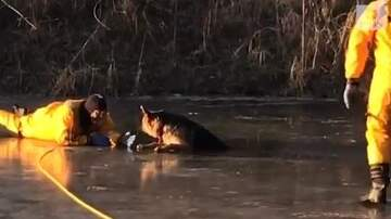 image for German Shepherd Pup Rescued From Pond