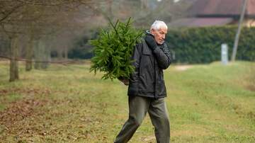 Reading and Harrisburg Breaking News - Christmas Tree Recycling Begins in Central PA
