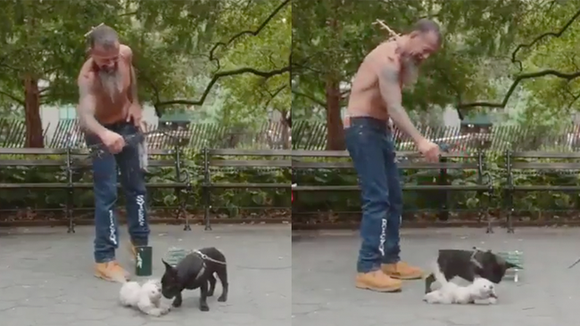 Dog Puppeteer Is So Good He Fools A Real Dog