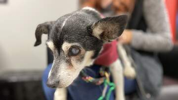 image for Missy needs a loving home to live out her golden years, meet her at HSSM
