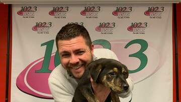 Steve Allan Pet of the Week - How About Kicking Off Your New Year With A Puppy?