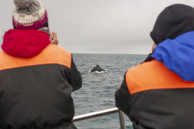 Two photographers shooting a Humpback whale during a whalewatching trip, Husavik, North Iceland