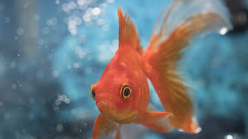 Randy McCarten - This Fish Looks Grumpy.  See the Happiest Fish Ever!