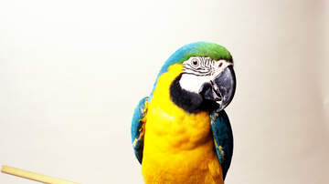 image for Cops came running after hearing screams for help. It was a parrot.