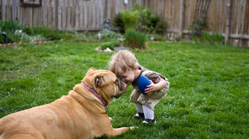 Bob Alexander - Doggy Gets Some First Aid From His Little Human