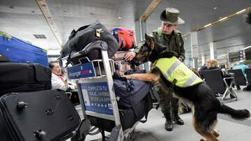 Defense - Several Bomb-Sniffing Dogs died while in service