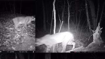 Madison - Check out new pics of the bobcat in my backyard!!!