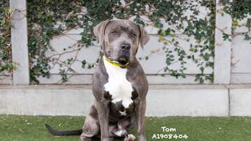 image for Meet Tom: A Very very Affectionate and Playful Friend
