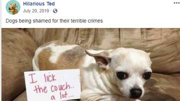 image for These Dog Shaming Pics Will Make Your Day!