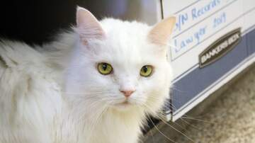 image for LCHS Pet of the Week: Miss Sassafras