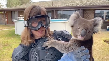 Weird News - Reporter Pranked Into Thinking A Koala Is A Vicious Animal On Live TV