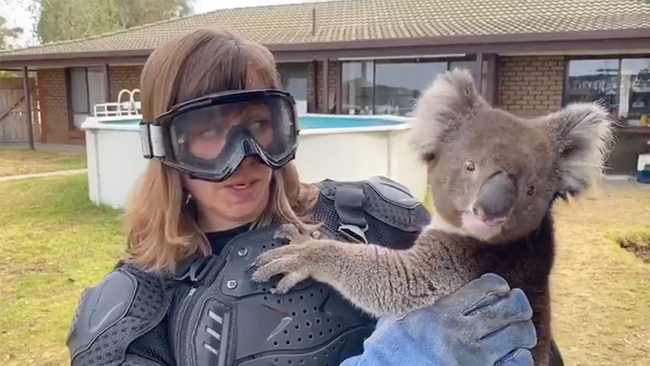 Reporter Pranked Into Thinking A Koala Is A Vicious Animal On Live TV