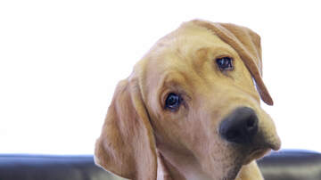 Beth & Friends - A New Device Can Tell You If Your Dog Is Depressed