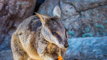 Spencer & Kristen - Planes Are Dropping Veggies For Stranded Animals In Australia