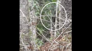 Coast to Coast AM with George Noory - Watch: Australian Man Films Yowie?