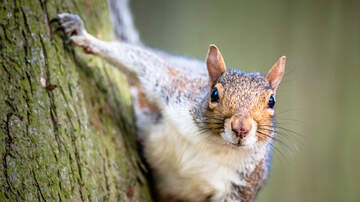 image for NATIONAL SQUIRREL APPRECIATION DAY - JAN 21