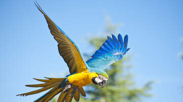 Beth & Friends -  Search underway for macaw that went missing from South Phoenix