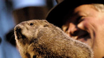 J-Wizz - NJ Town Using Stuffed Animal for Groundhog Day Festival